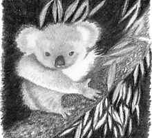 Koala at Night Pencil Sketch by Jane McDougall