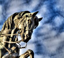 Horse head by collpics