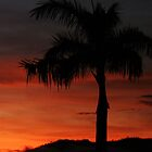El Arish Sunrise with Palm by STHogan