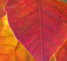 Autumn Color Sticker
