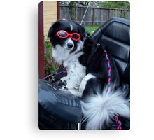 Max in his Goggles Waiting to Go Canvas Print