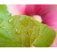 Flower and leaf Photographic Print