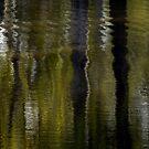 Rippling reflections by Elizabeth McPhee