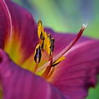 Lovely Lily by Deborah Clearwater