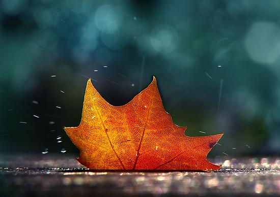 November Shower by John Poon