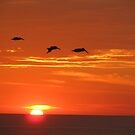 Sunset with Pelicans - Puesta del Sol con Pelcanos by PtoVallartaMex