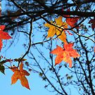 Lovely Leaves by Lisa G. Putman