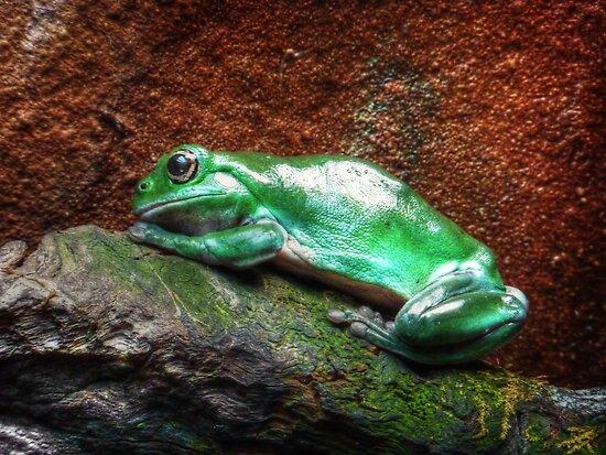 Kermit the frog by Chris Brunton