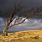 Tree, Nab End by Simon Bowen