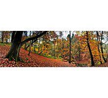 Autumn in Sunnydale Photographic Print