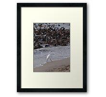 Crazy Times For Crazy Pelicans IV - Tiempos Locos Con Pelicanos Locos Framed Print
