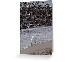 Crazy Times For Crazy Pelicans IV - Tiempos Locos Con Pelicanos Locos Greeting Card