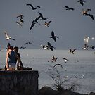 Crazy Times For Crazy Pelicans V - Tiempos Locos Con Pelicanos Locos by Bernhard Matejka