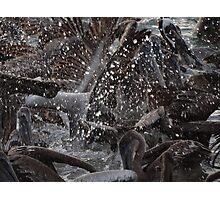 Pelican's Chaos - Chaos De Los Pelicanos Photographic Print