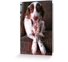 Brittany Spaniel: Winston Greeting Card