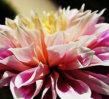 flower by bertsimo
