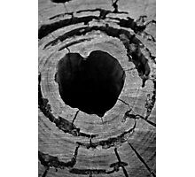the hearted stump Photographic Print