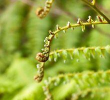 new leaf by aurelie k