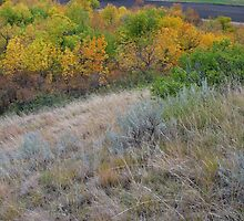 Sage Hillside by Rod J Wood