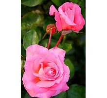 Two Roses in Pink Photographic Print