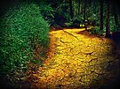 """The cracked earth below our feet (or """"The yellow brick road"""") by Scott Mitchell"""