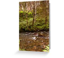 Gold Creek in Alaska Greeting Card
