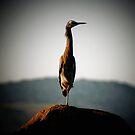 heron out one does stand one legged by SouthernScape