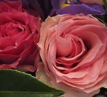 Companion Roses by MarianBendeth