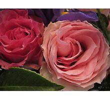 Companion Roses Photographic Print