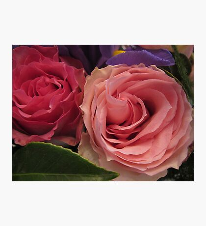 Companion Roses Photographic Print