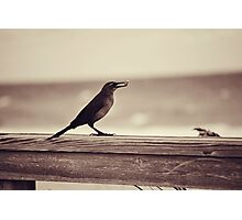 Bird Fun Photographic Print
