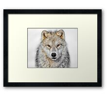 The Staredown Framed Print
