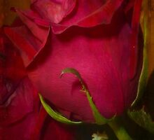 My Love Is Like A Red, Red Rose by Vickie Emms