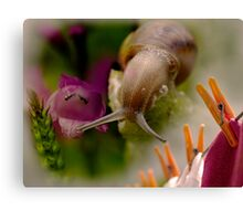 photography in my garden Canvas Print