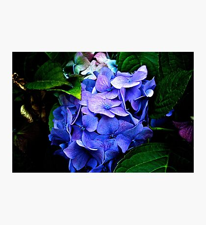 Purple Delight Photographic Print