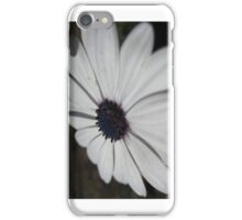 African Daisy - iCase iPhone Case/Skin