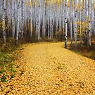 Golden Road by Rondo93