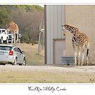 Fossil Rim Wildlife Center by Dyle Warren