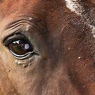 Big Eyes by Josie Eldred