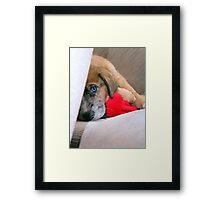 Travis' New Puppy Framed Print