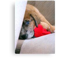 Travis' New Puppy Canvas Print