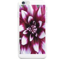 Dahlia - iCase iPhone Case/Skin