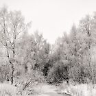 Frozen River and Birches by Ari Salmela