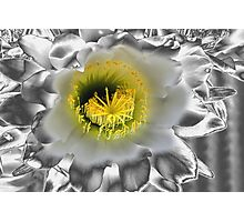 Metalised Night Cactus Flower Photographic Print