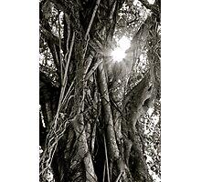 Shinning Tree Photographic Print
