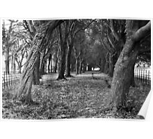 Phoenix Park Trees [near the school], Dublin Poster