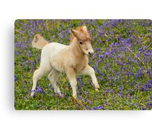 Galloping Foal Canvas Print
