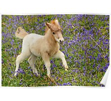 Galloping Foal Poster