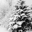 Snowy by Ólafur Már Sigurðsson