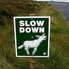 Slow Down by Pete  Burton
